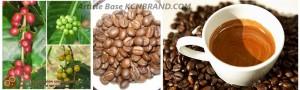 Arabica Coffee | Article Base KCNBRAND.COM