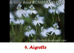 Aigrette | Article Base KCNBRAND.COM